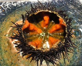 Sea urchin and pumpkin broth