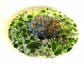Aged caviar with salt from the west coast and emulsion of raw oysters, warm sauce of mussels and dill