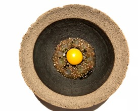 Quail egg gently cooked in roasted bone marrow cured mutton and charred onions