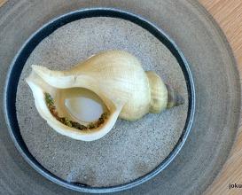 sea snail broth