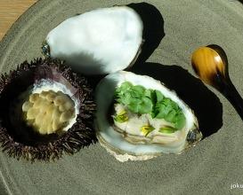 sea urchin, gigas oyster