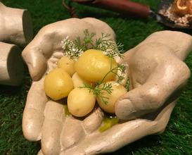 Farmer Hands Soil/ Potatoes/ Flowers/ Artichoke/ Beetroot