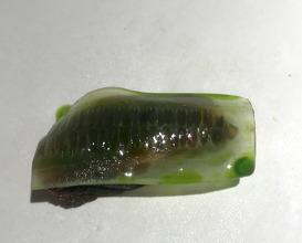 Hoisin Cucumber