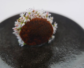 Dinner at Maaemo