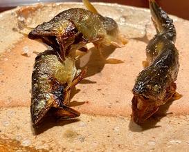 Dinner at Ginzafujiyama (銀座ふじやま)