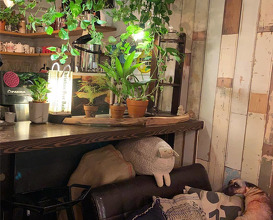 Dinner at 溫古咖啡 Wengu cafe