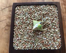 Barbajuan: Black olives, anchovies, confit lemon