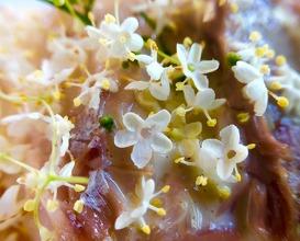 Sea bream, fermented radish and elderflower