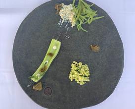 Baby cucumber, zucchini, celery tarator, wild samphire, green beans, pickled high mallow, modified yogurt